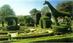 a small blade trimmer is useful for topiary
