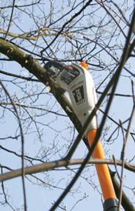 Ryobi Pole Pruner in action