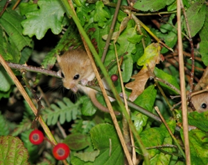 a hedge can be a haven for wildlife