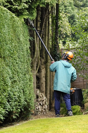 a pole hedge trimmer makes it easy to cut tall hedges from the safety of the ground