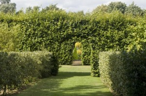 tips for trimming formal hedges